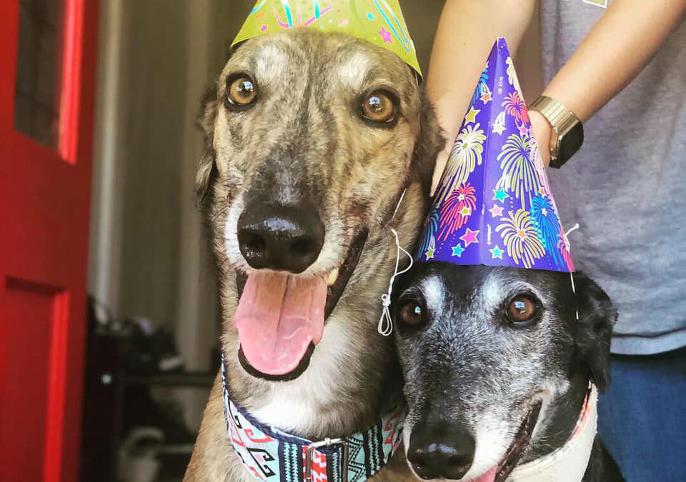 Have you considered your hound on New Years Eve?