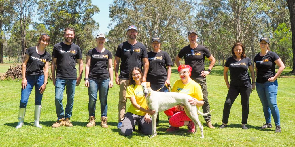 Corporate Volunteering day at Greyhound Rescue