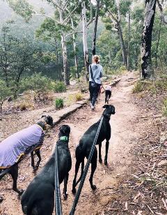 Hound-friendly walks – Lake Parramatta Reserve