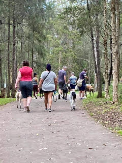 Nurragingy Reserve – Hound-friendly walks