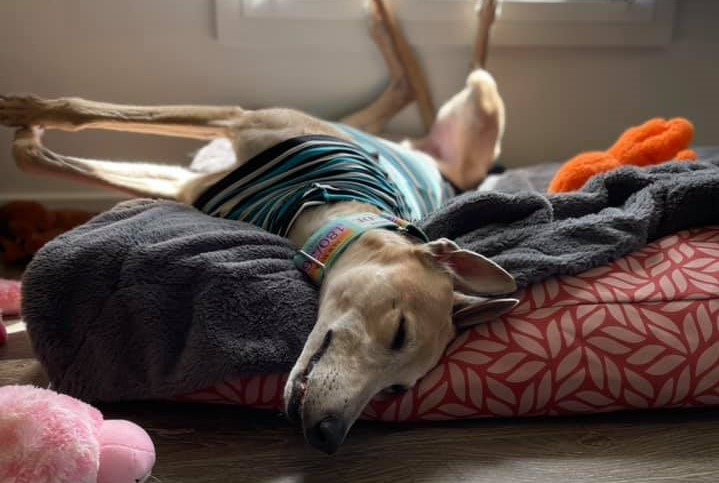 Why is my hound wakeful at night?